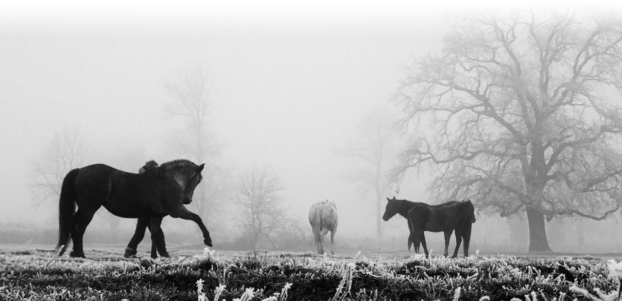 Les Chevaux Célestes, compagnie de spectacle et stages équestres basée en Bourgogne
